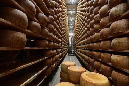 图片为2019年4月5日在意大利莫泰贾纳一家乳制品农场拍摄的帕尔马奶酪。新华社/法新
