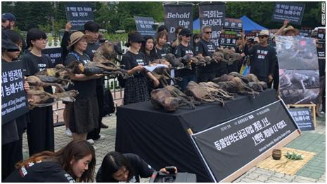 (動保人士捧著幼犬尸體,呼吁政府結束狗肉產業。圖源:CNN)