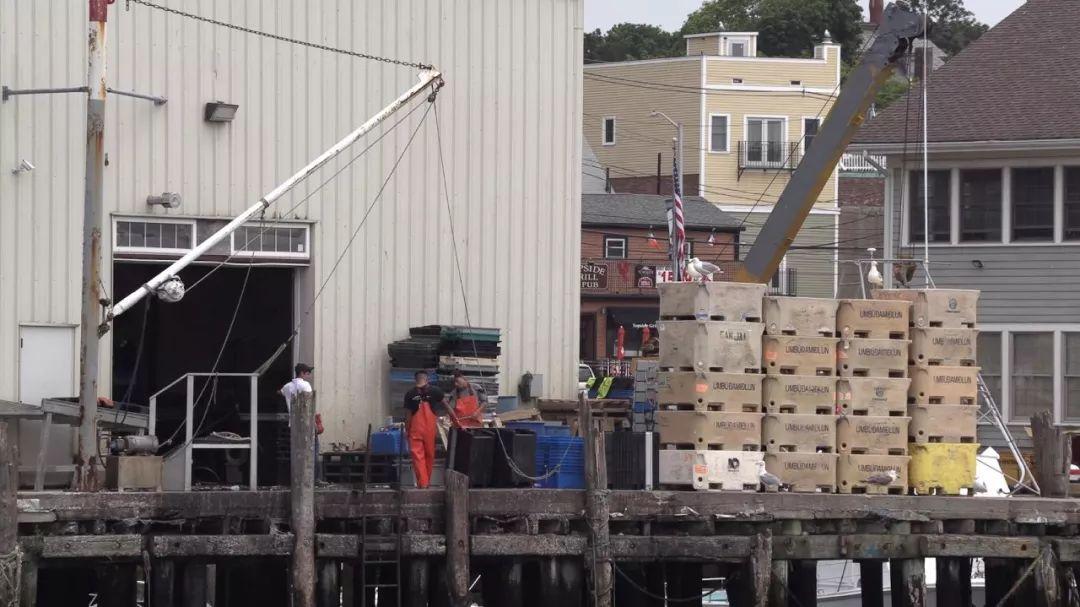 圖為龍蝦貿易商文斯·莫爾蒂拉羅的龍蝦儲存倉庫。