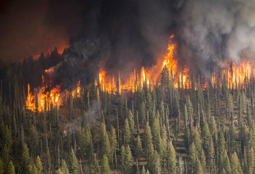 俄森林大火持续肆虐 过火面积超1.5万平方公里