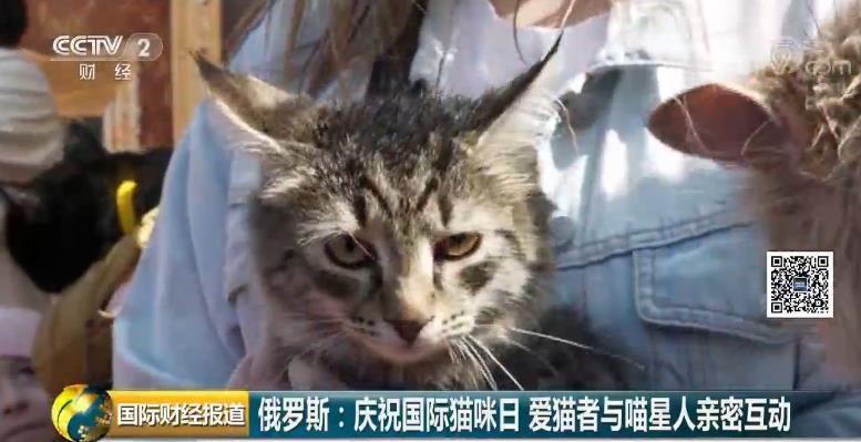 俄罗斯庆祝国际猫咪日 今天你撸猫了吗?