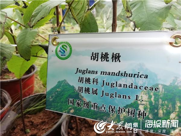 山东:近千株濒危树种回归昆嵛山