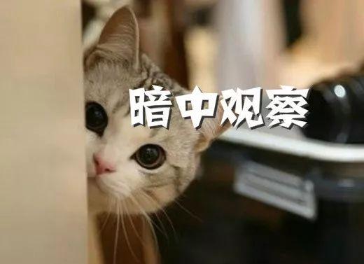 中静系出清股份 徽商银行IPO回A清障?