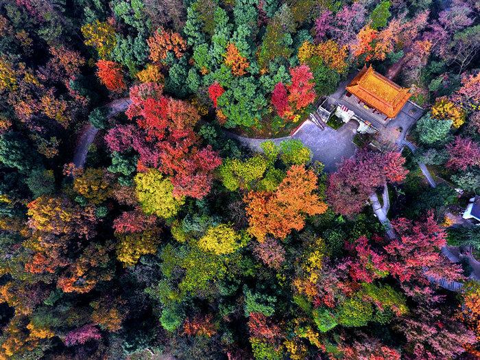 武義秀美如畫的彩色森林亮相學習強國平臺