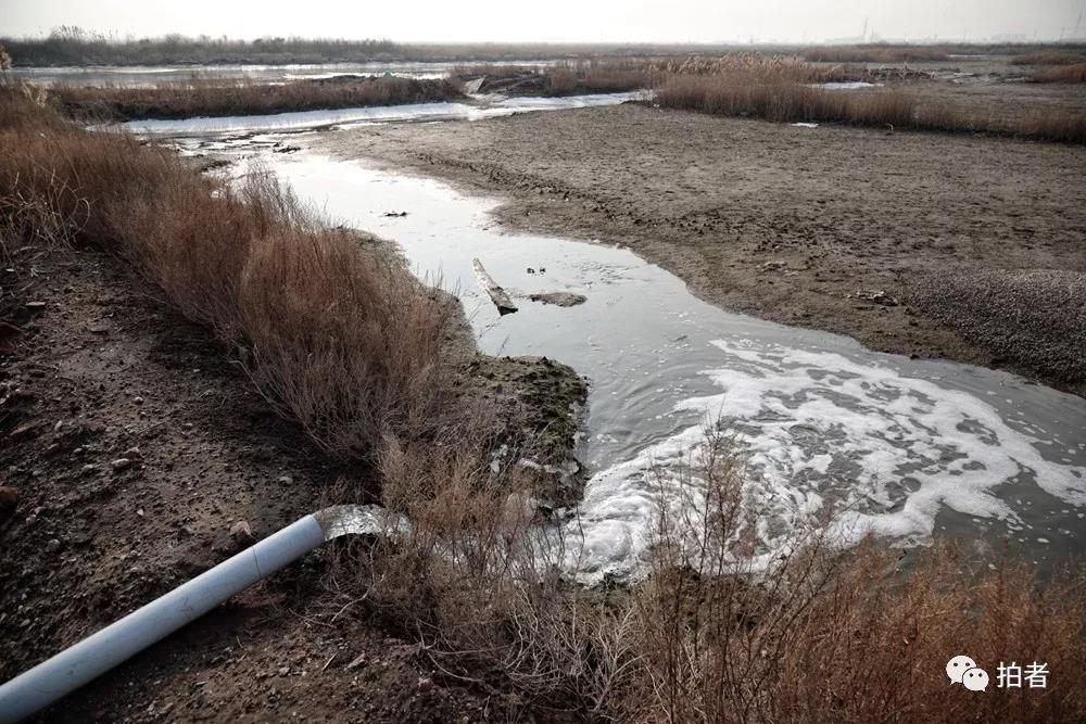 △12月7日手机买彩app,田志伟用水灌溉一片闲置的土地,以形成正当候鸟生活的湿地。