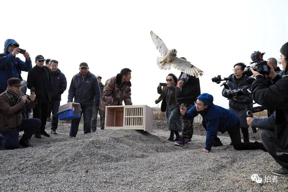 △11月16日,一只之前受援助的鸟被放生。