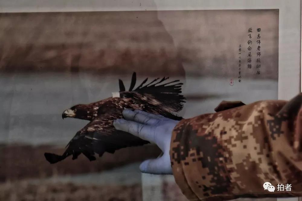"""△12月7日,田志伟基地内,他爱抚着一张鸟的照片,这是他曾经援助过的鸟,以去每年都会回基地。""""去年和今年都异国回来,能够已经出意表了""""。"""