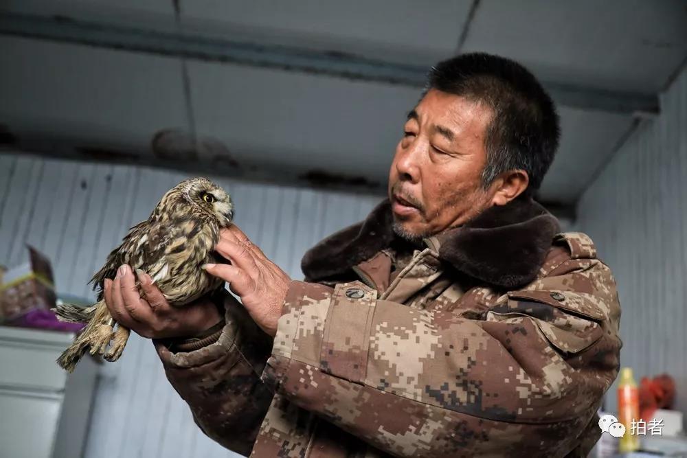 △11月16日,田志伟不都雅察一只批准援助的短耳鸮。