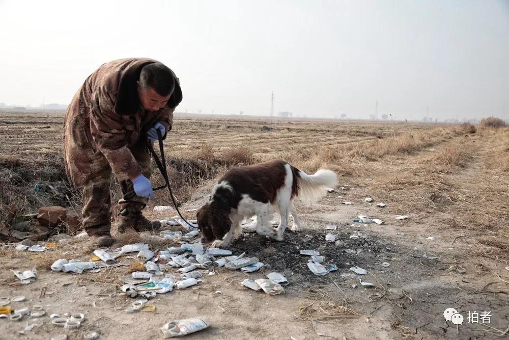 △12月7日,田志伟指使安迪检查一堆被屏舍的化学品罐是否有毒物。安迪曾经是一条缉毒犬,现在协助田志伟检查候鸟栖休地的食物坦然。