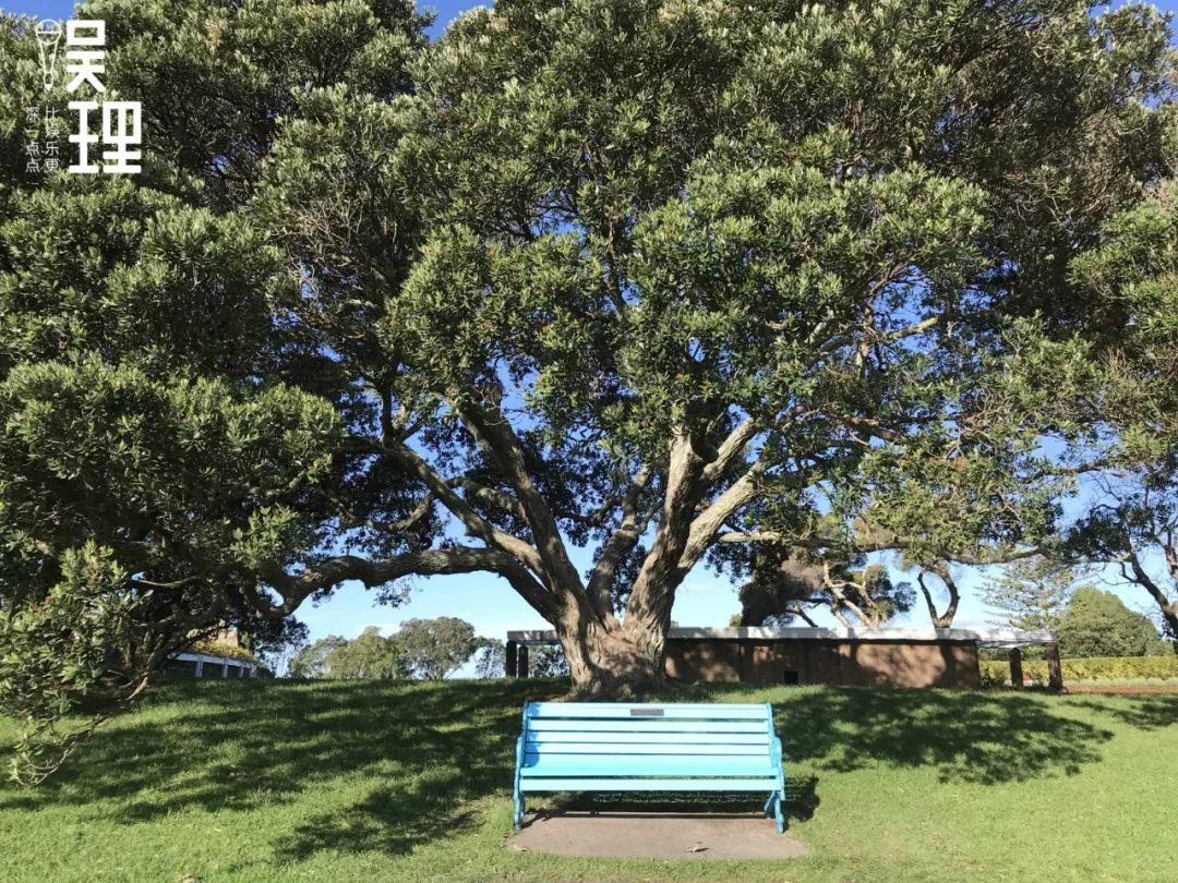 《只要芸知道》新西兰片场,影戏片头片尾出现的蓝色长椅(拍照:杨晋亚)