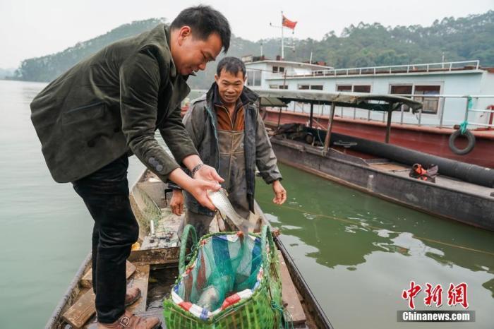 媲美日本刺身的古膾:廣西橫縣魚