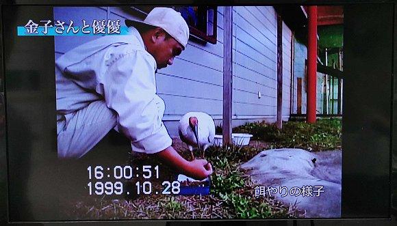 20年前的金子良则抚养优优的短片 来源:佐渡朱�q保护中心