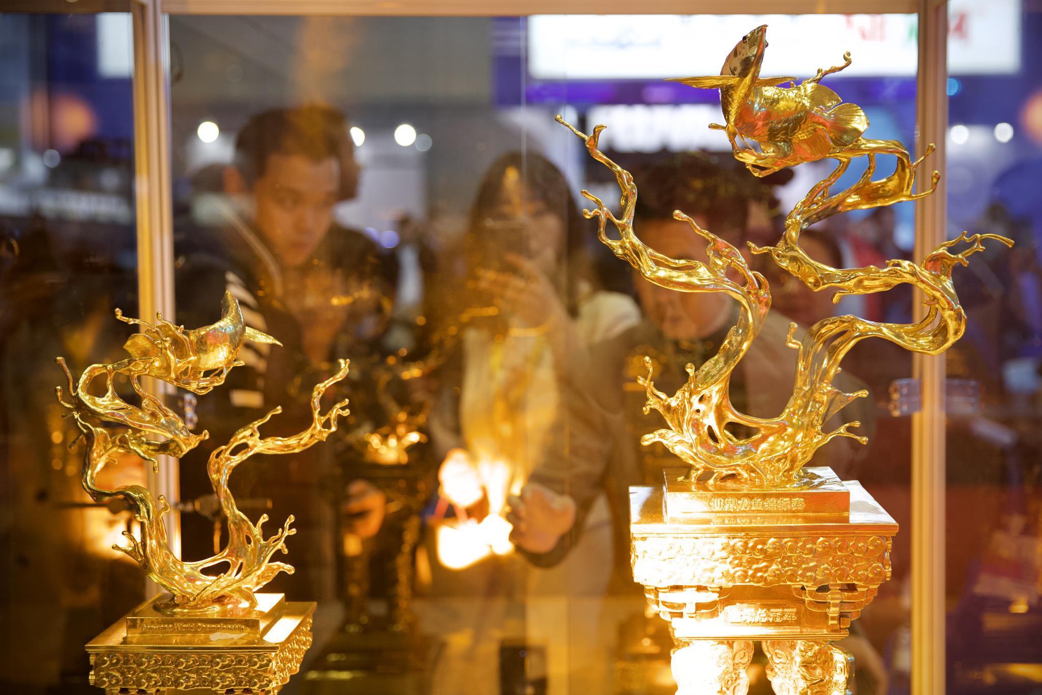 金光灿灿的龙鱼比赛奖杯。新京报记者 郑新洽 摄
