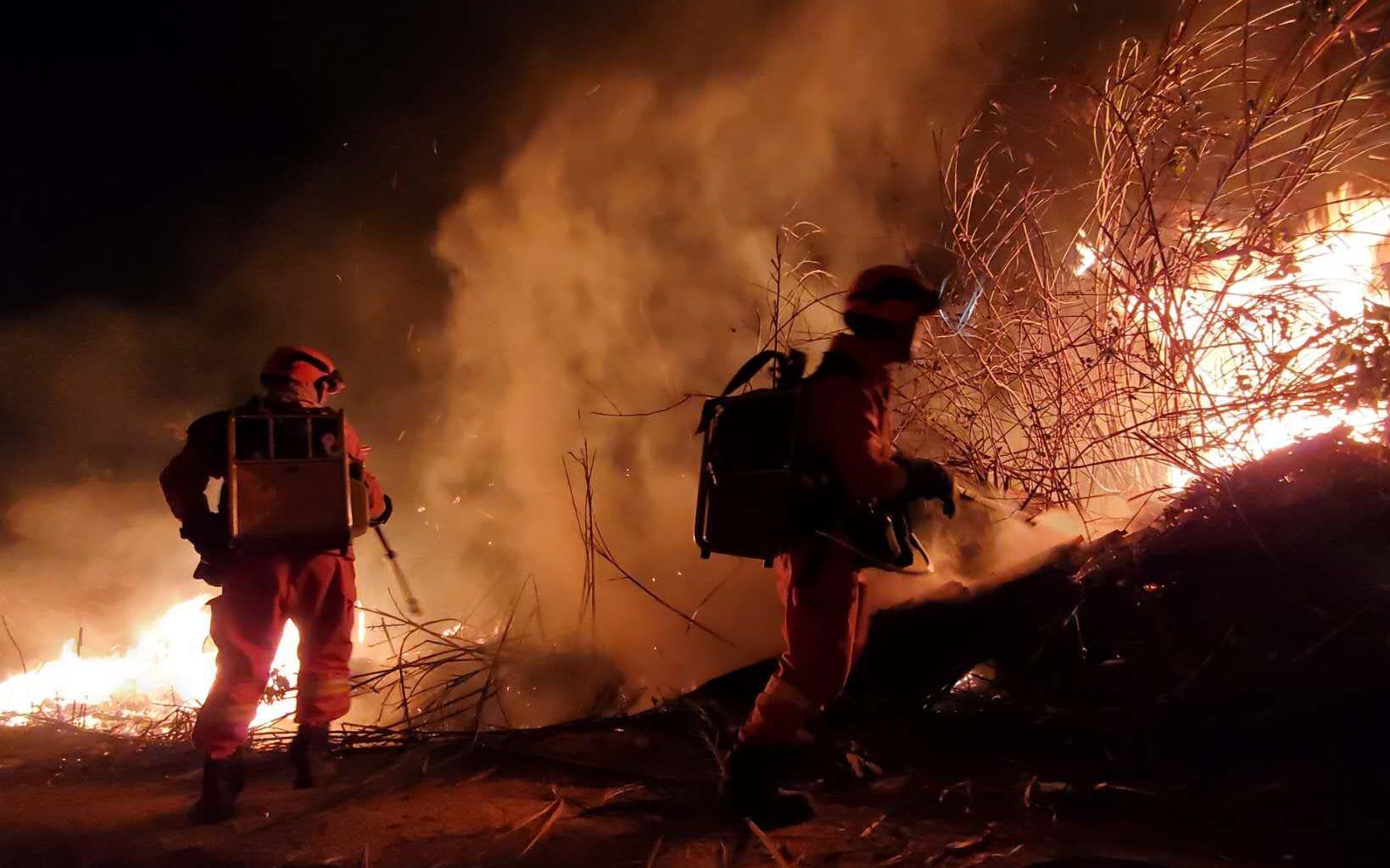 消防员正在林场灭火。应急管理部森林消防局供图
