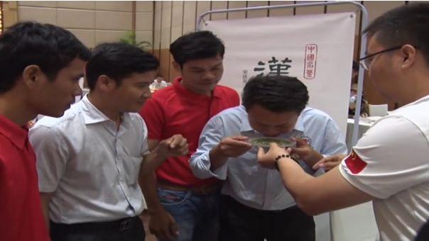 2019丝路万里行 | 中国茶叶在柬埔寨金边获好评