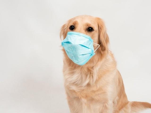 美国一宠物狗突发呼吸窘迫症 死后被查出感染新冠