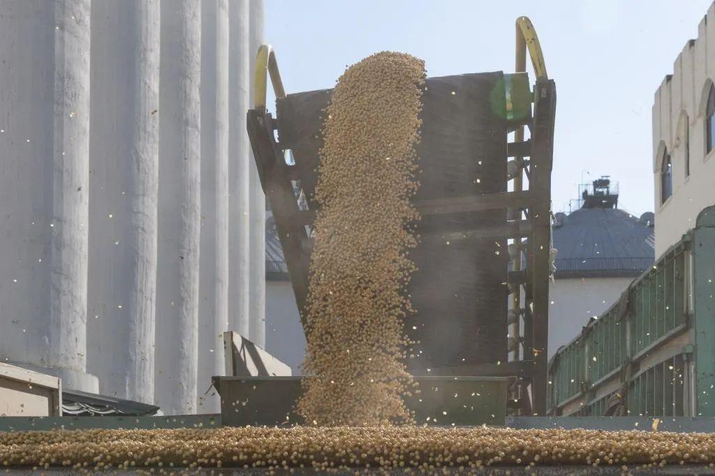 大豆储藏注意事项
