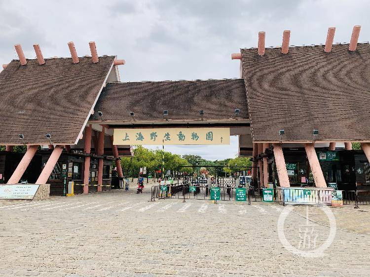 ▲10月19日上午,上海野生动物园,进出的人员不众。摄影/上游信休记者 时婷婷