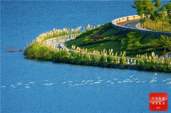 湖水湛蓝、芦苇似雪、白鹭齐飞,暖阳倾洒在环湖绿道上,勾勒出一幅恬静的秋日诗意图。(杭州市西湖区纪委监委供 张超 摄)