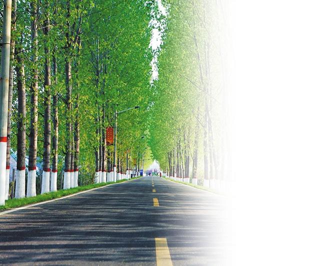 """图为康大线公路两旁郁郁葱葱,变身""""风景线""""。杨之甜 摄"""