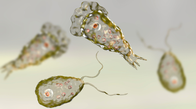 """""""食脑虫""""正穿越美国向北迁徙:感染后死亡率超95%"""