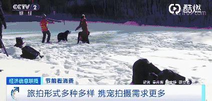 一套宠物摄影写真竟要花费数千元,至少提前一个月预约有的,甚至要等一年