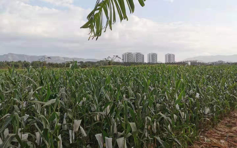 農業農村部發文加強農業轉基因生物監管,道道全等曾違規圖片