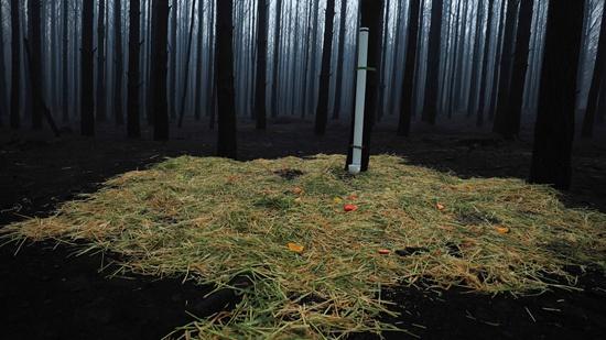 1月12日,在距澳大利亚首都堪培拉一个多小时车程的温杰洛村附近,消防员在过火后的森林中为动物们准备了食物和水。储晨/摄(新华社发)