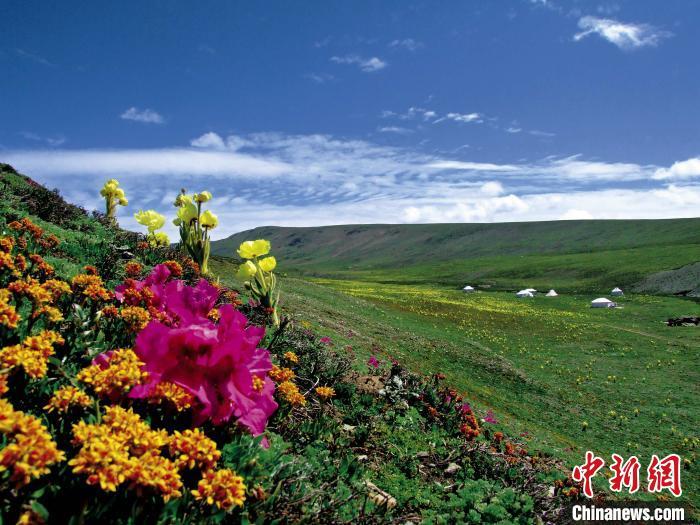 """绿水青山就是金山银山:三江源牧民捧起""""生态"""