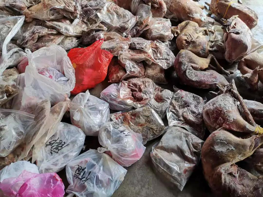 △图片由湖南永州市林业部门供给