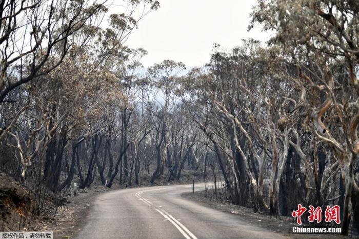当地时间2019年12月18日,位于澳大利亚悉尼西北约120公里的蓝山山脉威森山发生森林大火,树木被烧成焦炭。