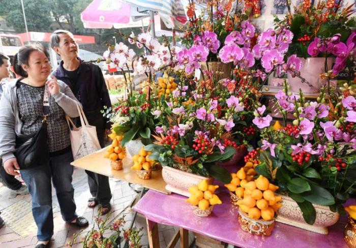 香港花墟年花绽放。图片来源:香港《大公报》记者摄