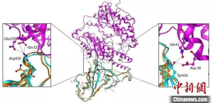 新型冠状病毒长这样 显微镜下繁衍数量惊人