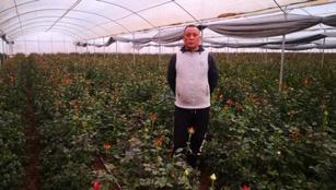 李叔和他的花棚
