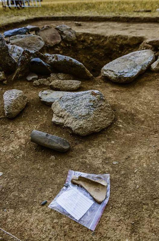 墓葬中发现的一块羊肩胛骨。(新华社记者 沈桥 摄)