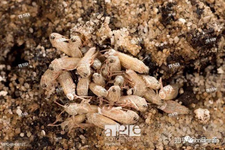 蝗灾暴虐 数十年稀有:东非多国遭年夜量蝗虫进侵