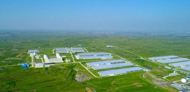 龙大肉食拟注册全资孙公司 5000万加码生猪养殖产业