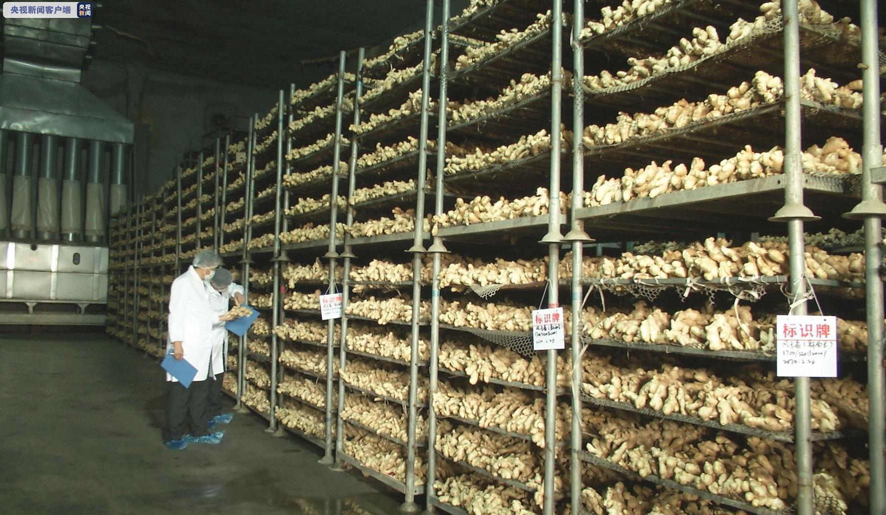 战疫情丨稳外贸 我国向新西兰出口首批生姜