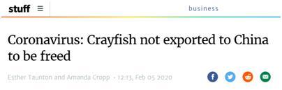 新西兰出口商的150吨至180吨活龙虾滞销 新西兰:部分放生