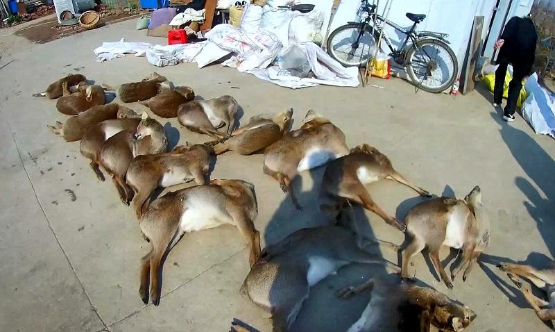 野生动物非法交易及防护用品制假售假将顶格处罚