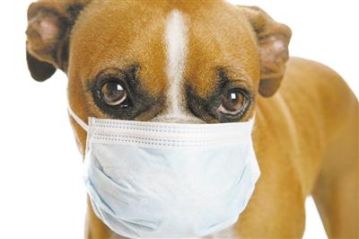 宠物狗检出新冠病毒弱阳性,会传染人吗