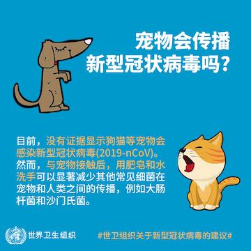 世界动物卫生组织:目前无证据表明宠物会传播新冠肺炎