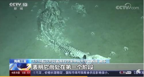 """我國南海首次發現鯨落!為什么說&quot一鯨落 萬物生""""?"""