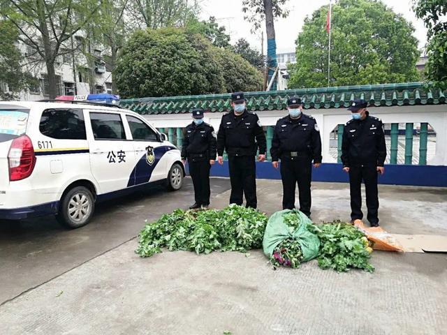 湖北监利:网友拍抖音举报罂粟 民警循线追踪查处