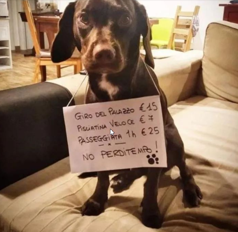 ↑一只明码标价的出租宠物狗。图据央视讯休