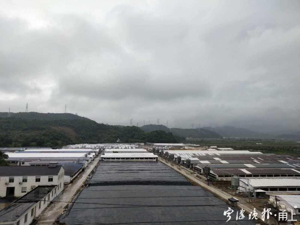 宁海农发牧业的养殖基地 采访对象供图