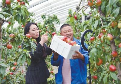 日前,安徽砀山县葛集镇新华村果农在自家油桃大棚里直播带货。