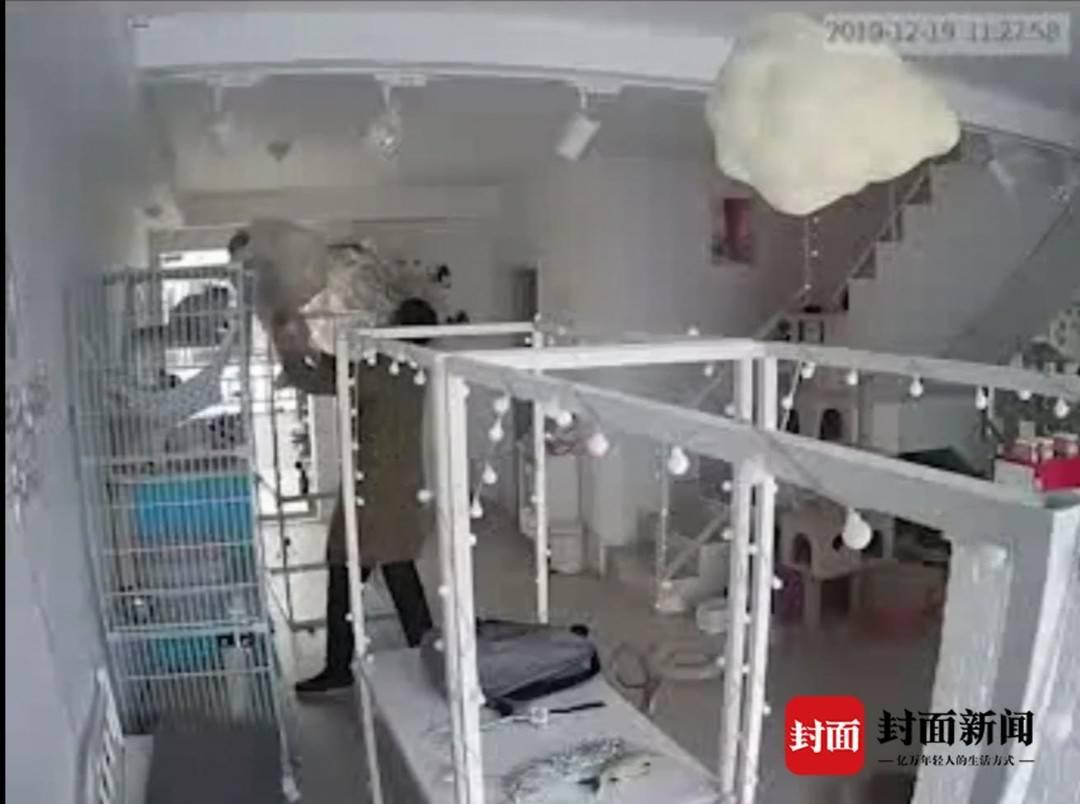 猫咖店曝光男子半年前虐猫视频 虐猫男子:我错了