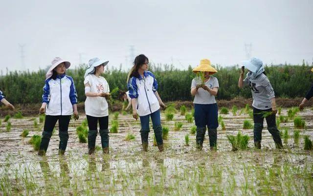 回家种地创业的研究生(图片来源:新京报)