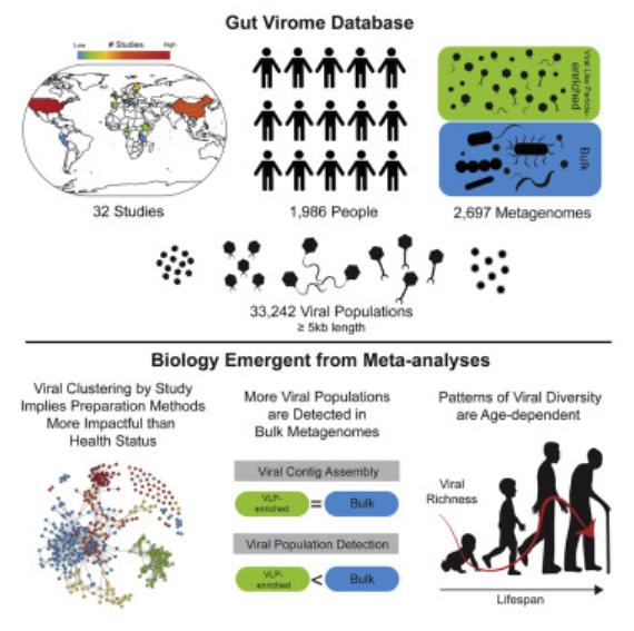 科学家创建首个肠道病毒数据库 可鉴定出33000多个独特病毒种群